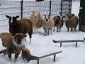 Valkenkamp in sneeuw 10