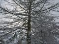 Valkenkamp in sneeuw 4 (1)