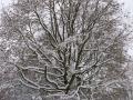 Valkenkamp in sneeuw 7