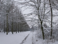 Valkenkamp in sneeuw 8