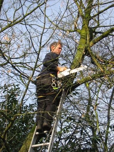 maart: Bomen in wijkpark