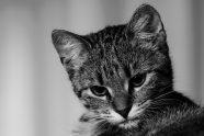12 juli: Overlast van katten(poep)