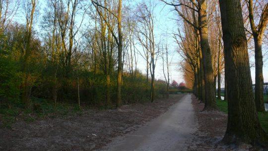 18 dec: Aan de slag in het parkgebied van Maarssenbroek