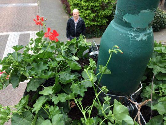 10 mei: de hanging baskets bloeien weer