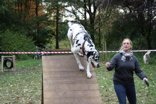 1 okt: Situatie Hondenspeelplaats